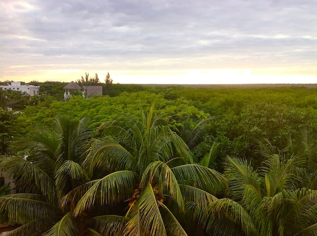 Sunset over the mangrove jungle from the upper roof deck.