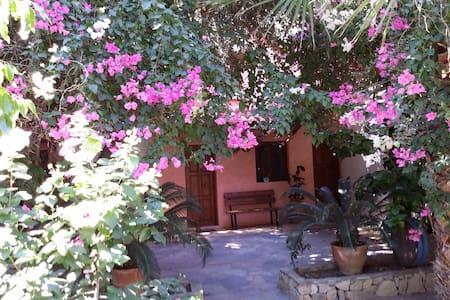 Olive tree Cottages