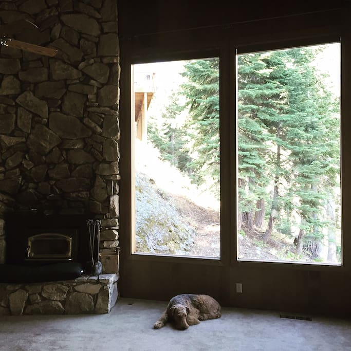 Main room with stone fireplace and views of the forest and mountains. Airedale Terrier not included!