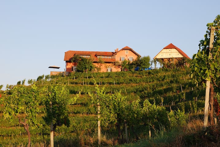 The house and adjacent oak barn surrounded with private vineyards.