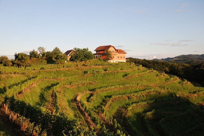 Approach to the estate amongst the secluded terraced vineyards.