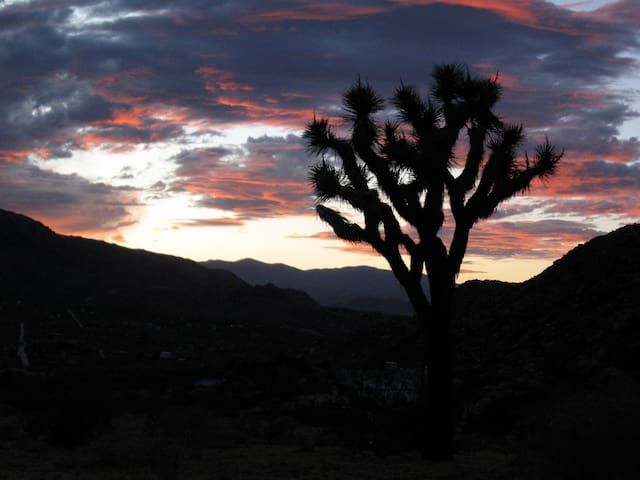Only in Joshua Tree.  No filters. No photoshop.