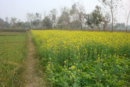Countryside house nearby Lumbini - Dayanagar - Bed & Breakfast