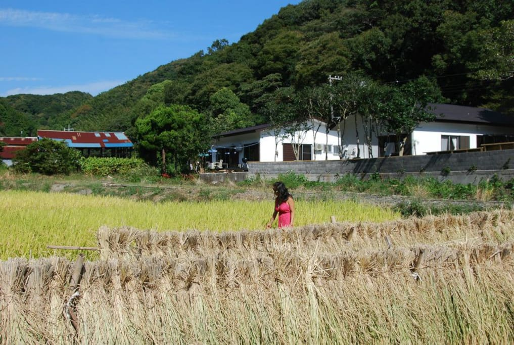 View of house and forest from rice paddies.