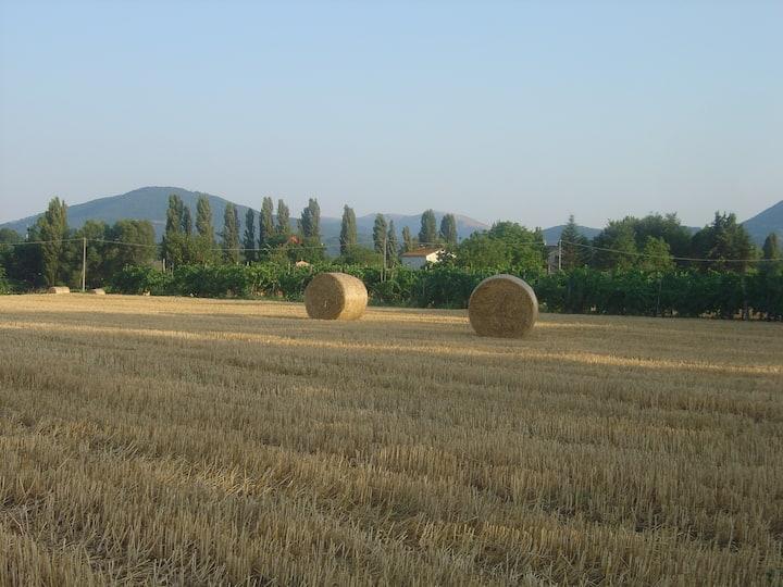 Relax nelle campagne umbre-Montone