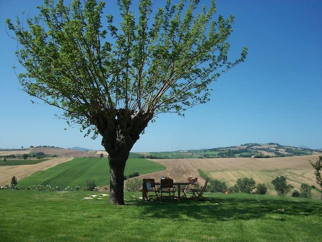 Italian Marche Hills - Sunrise - Mondavio