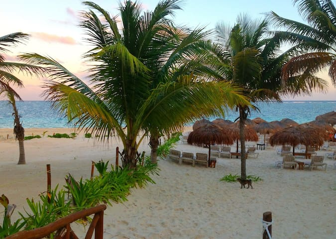 A short walk up the beach Unico Bar with great food, drinks, music, shady palapas and sand volleyball.