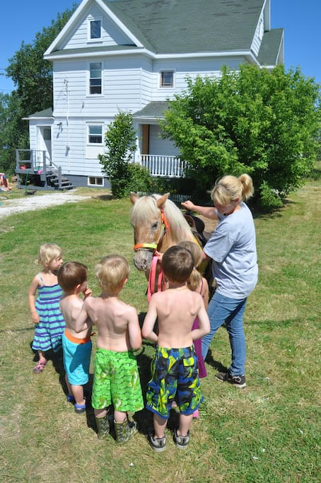 Neighbours brought a Pony over for the kids to ride