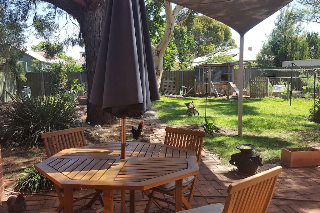 Shady backyard with weberQ, good for chilling. Chooks out back laying fresh eggs for your breakfast!