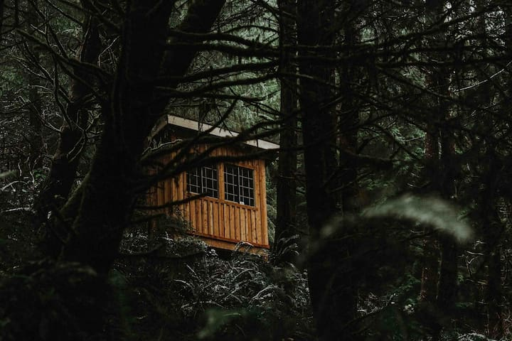 Fern Gully: Cypress Cabin (New Cabin)