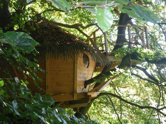 """La cabane du """"Grand Hêtre"""""""