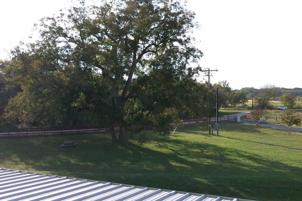 View of the front, huge pecan trees