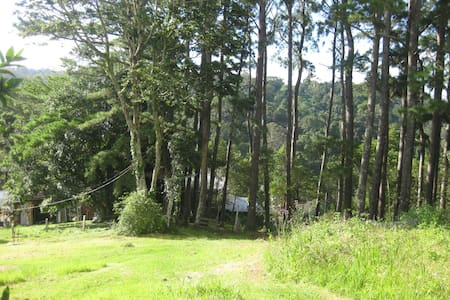 Rustic Rainforest Retreat - Mount Glorious - Cabane