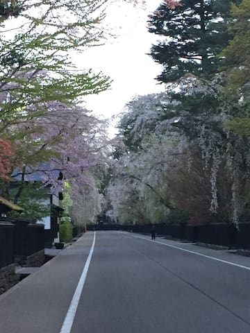 美しい桜並木にある家