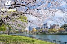 桜の季節には遊歩道が楽しめます。