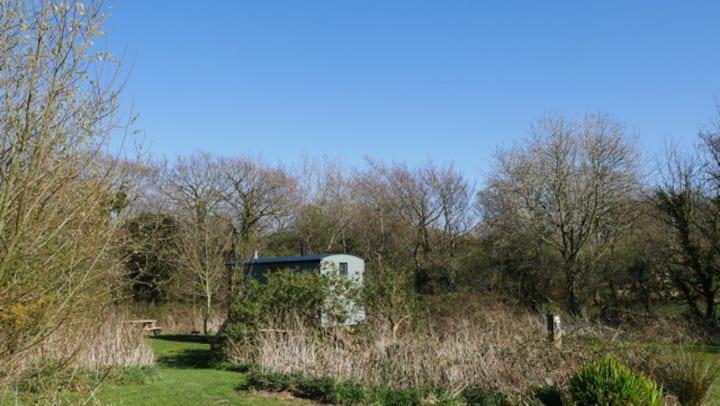 Cosy Shepherd's Hut near ZipWorld and Snowdon