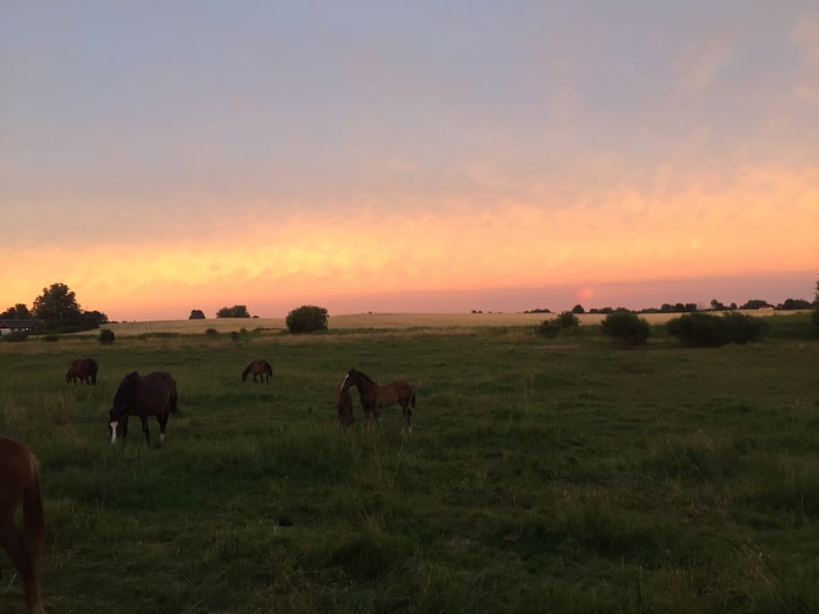 Gångvägar närheten av huset. Trevliga rundor särskilt om man tycker om att se hästar. Bilden är tagen ca 1 km från huset längs promenaden.