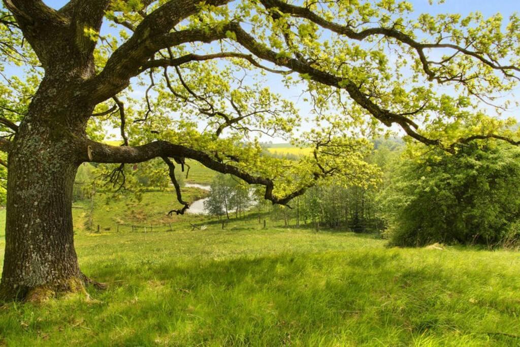 Farm Stay at Egehøj Natur