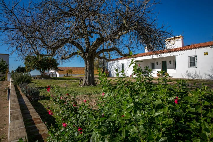 Your Warm Cottage in Alentejo - Herdade do Pocinho - Redondo - Villa