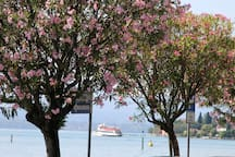 Viale alberato Walking trial with flowers trees