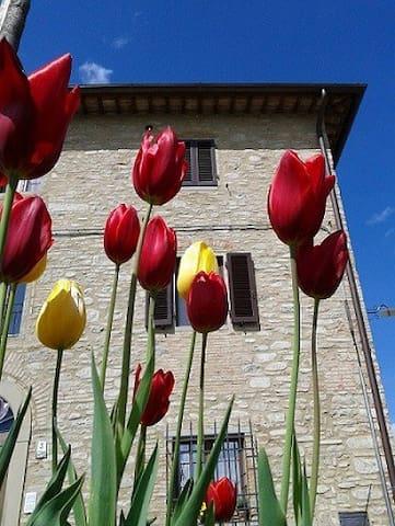 Casa Vacanze Nadia - Sansepolcro - Apartamento