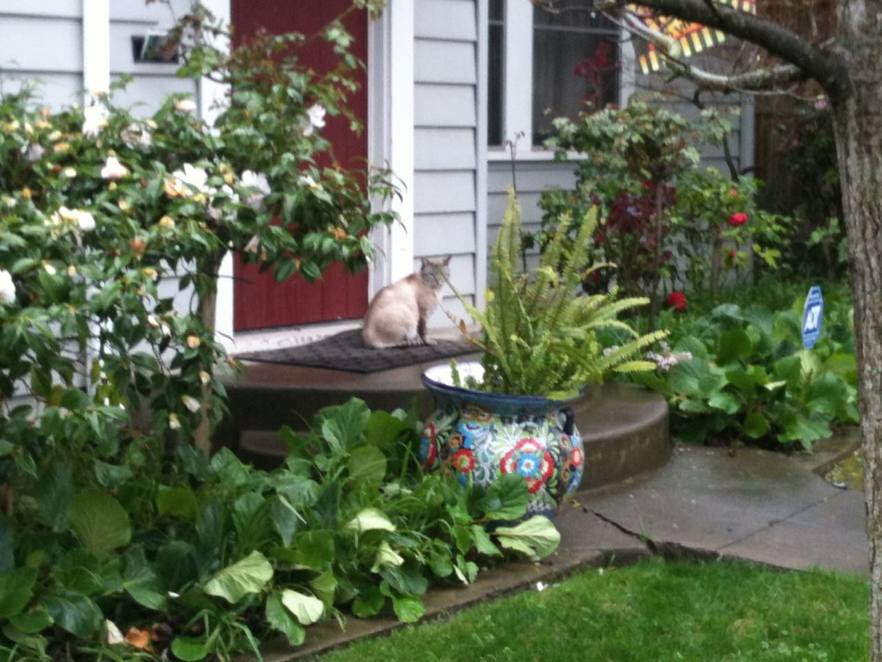 Welcome to our home. The cat on the stoop is a neighborhood cat, not ours.