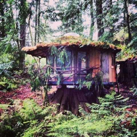 The Stump House: SunRay Kelley - Sedro-Woolley - Ağaç Ev