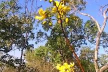 Natural bush setting