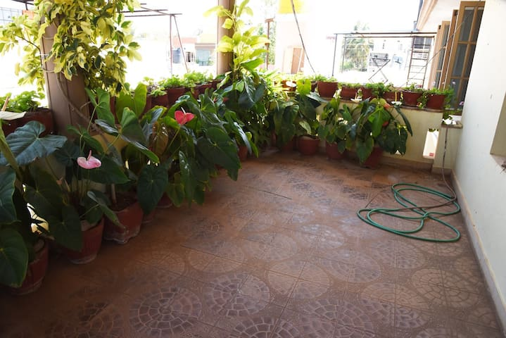 Balcony View #1 (with lot of exotic potted plants)