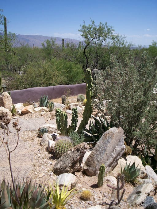 Rincon Mountain views and desert plantings on the property.