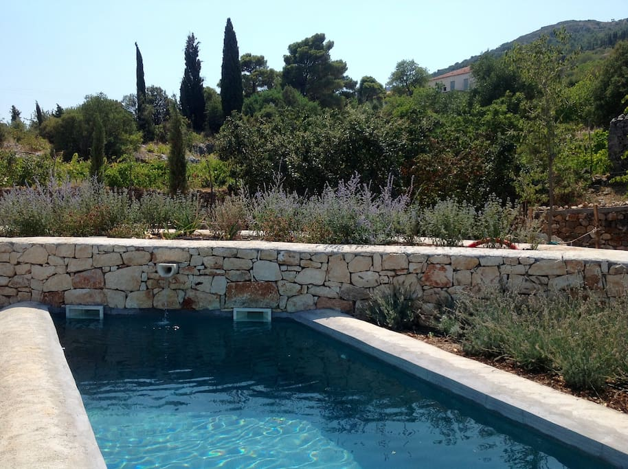 The pool, surrounded by lavenders and butterflies.