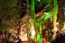 Patio with firepit under the trees.  If guests are interested, I make a fire at night.  The green lights are bliss lights. Photo by guest Jaime Kowal