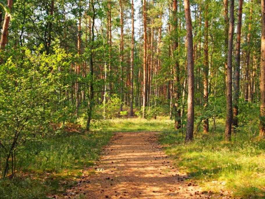 Waldgebiet direkt am Haus