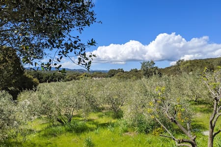 Peaceful Cottage in an Olive Grove