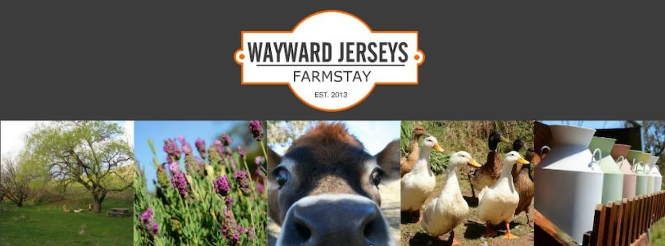 Wayward Jerseys Farmstay