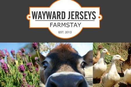 Wayward Jerseys Farmstay - Arding - Bed & Breakfast