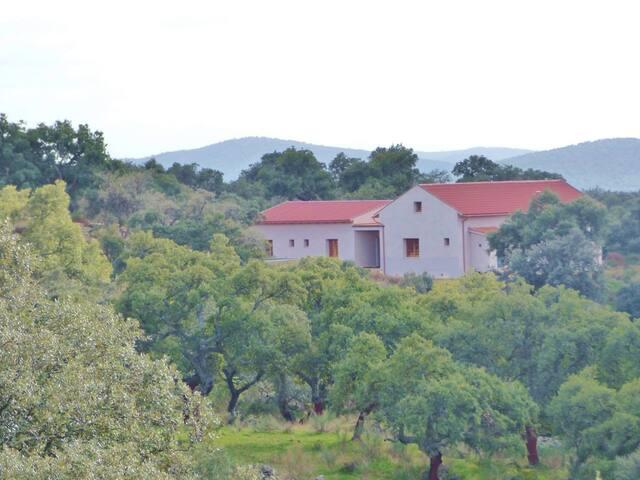 Casa de Sierra, a lovely house in an olive grove