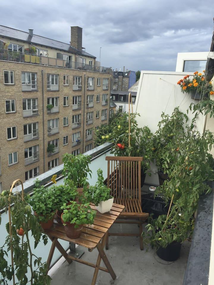 Altan / balcony