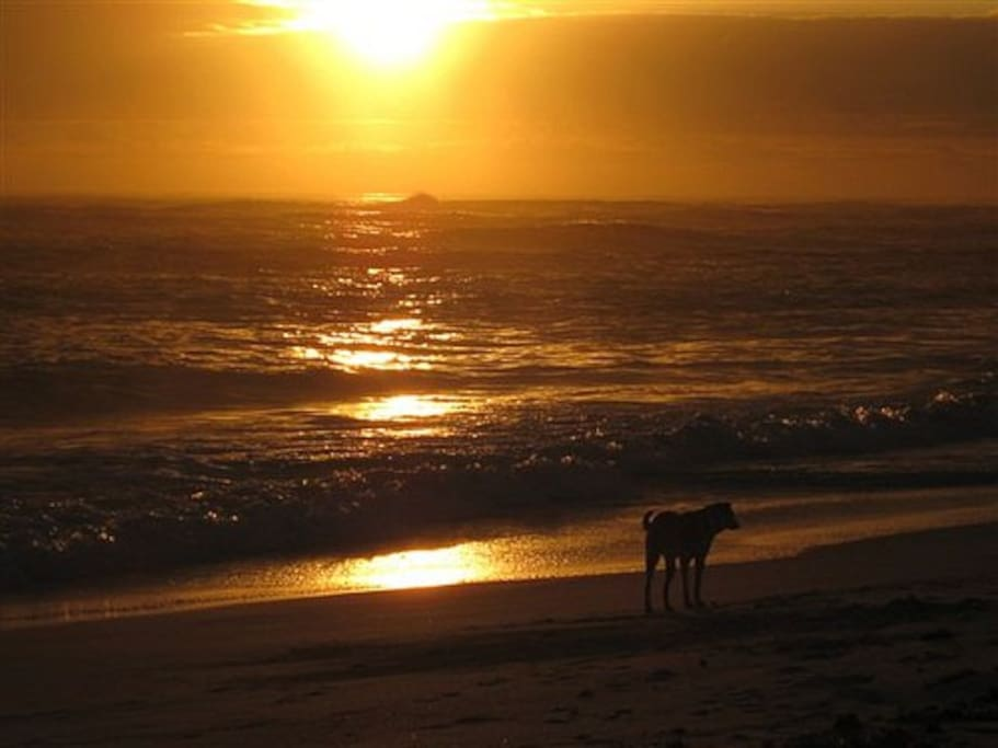 Sunrise with the doggies