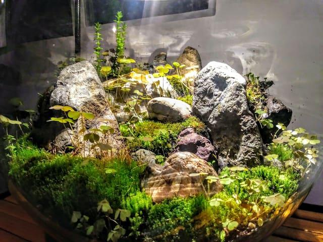 Tiny indoor terrarium landscape