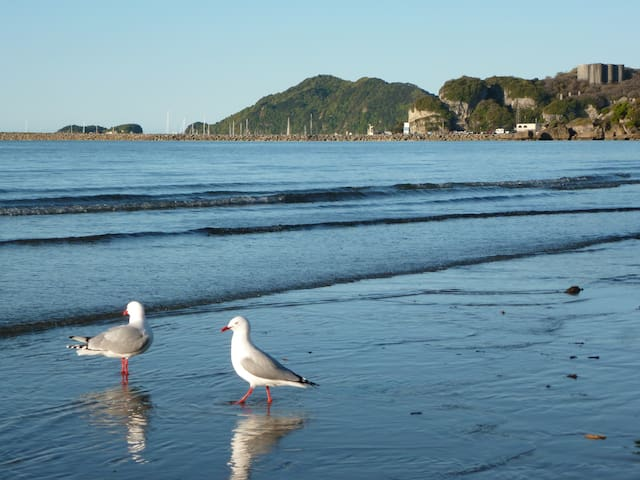 Playful seagulls at our local beach just a short stroll from your Glamping location