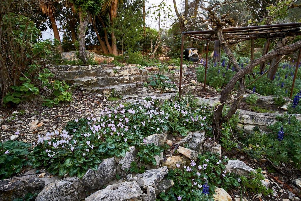 home garden - spring