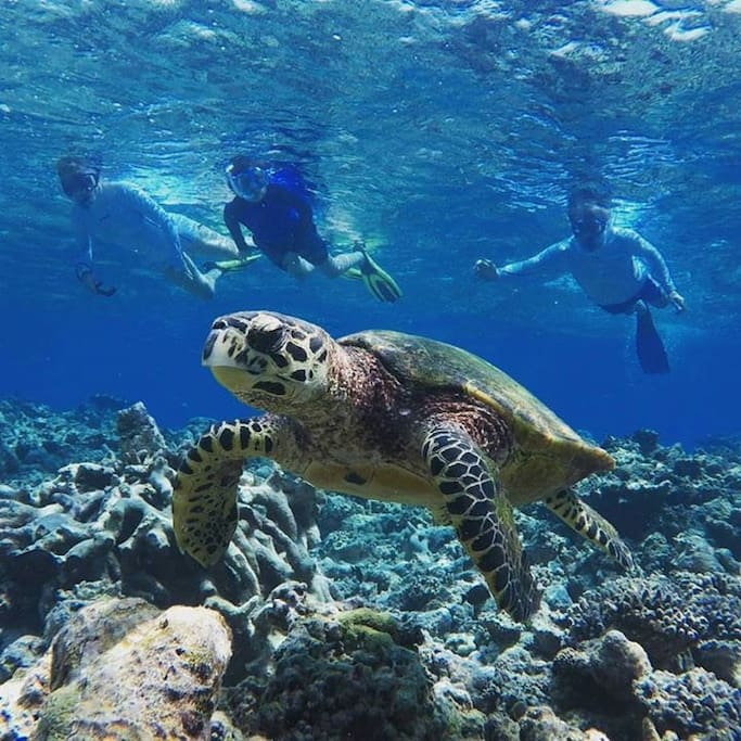 Turtle point snorkeling,
