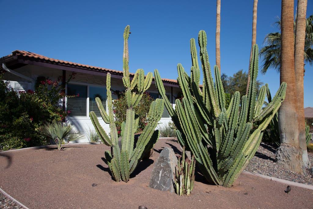Front desert garden.