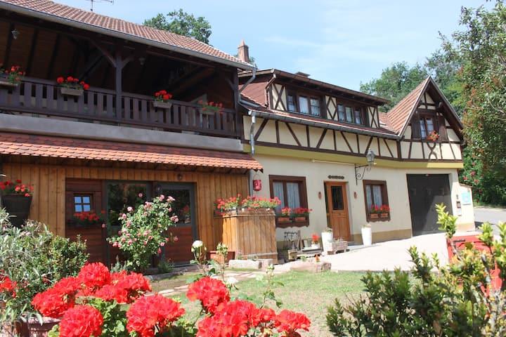 Au cœur du vignoble Alsacien proche de Europa park