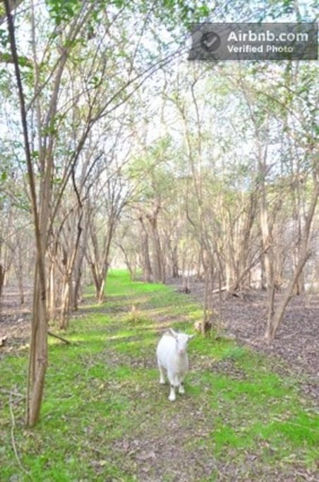 'My Flaquita' wants to show you the nature trail...