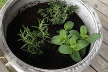 some herbs to go in your dinner