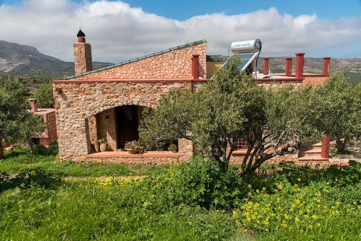 Villa in the Olive Grove
