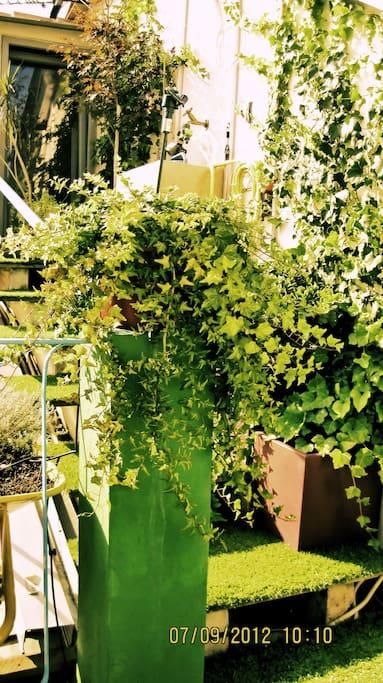 Green Outdoor Terrace