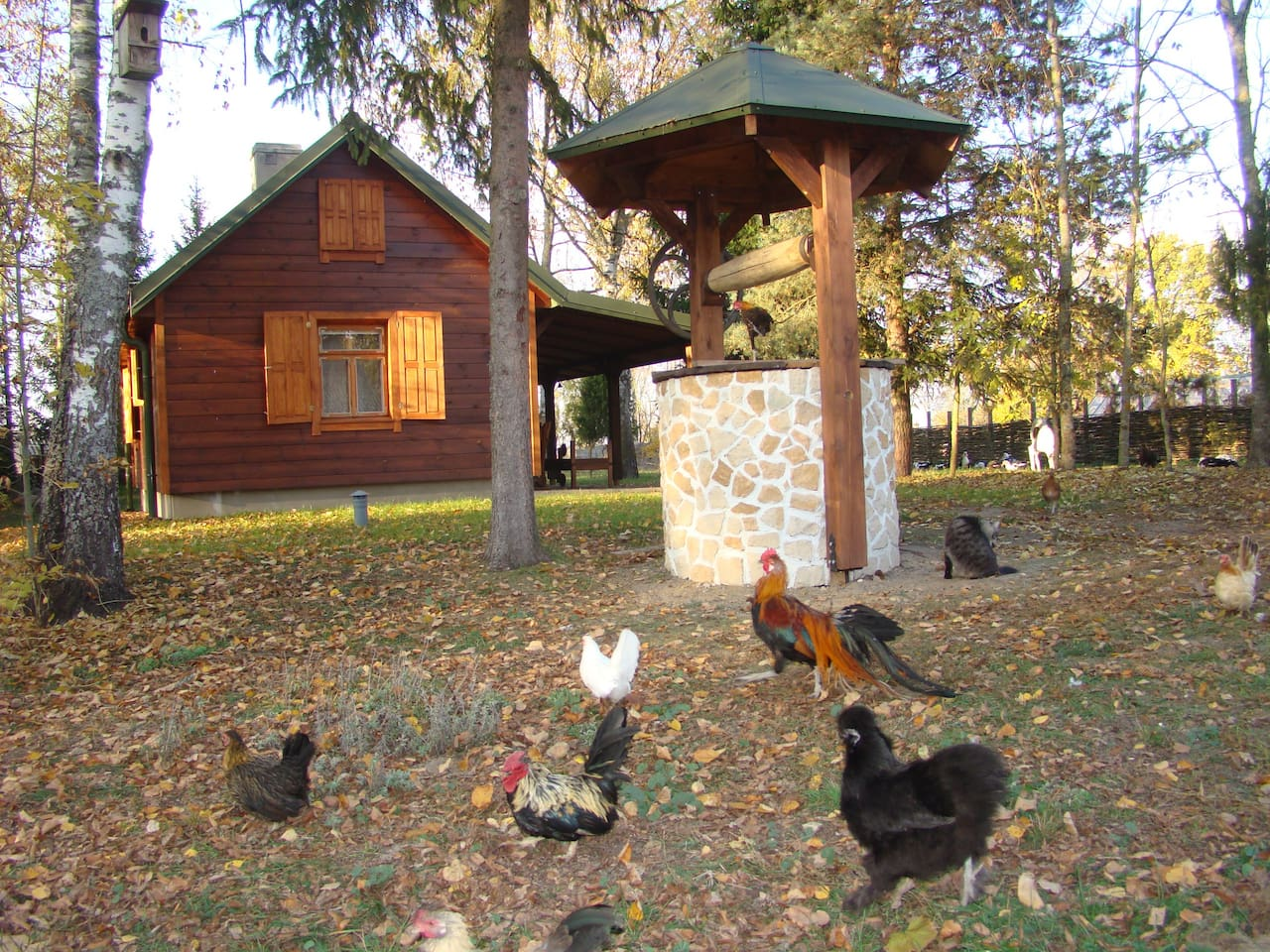 Chalet to rent in our Organic Farm,  in the Bialowieza forest